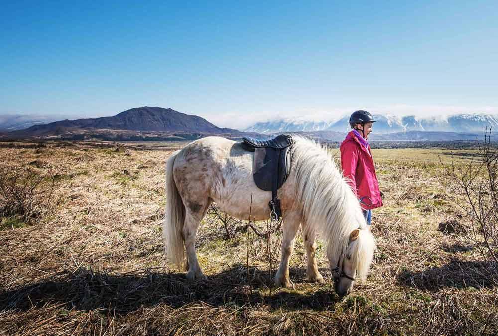 Icelandic horse tour