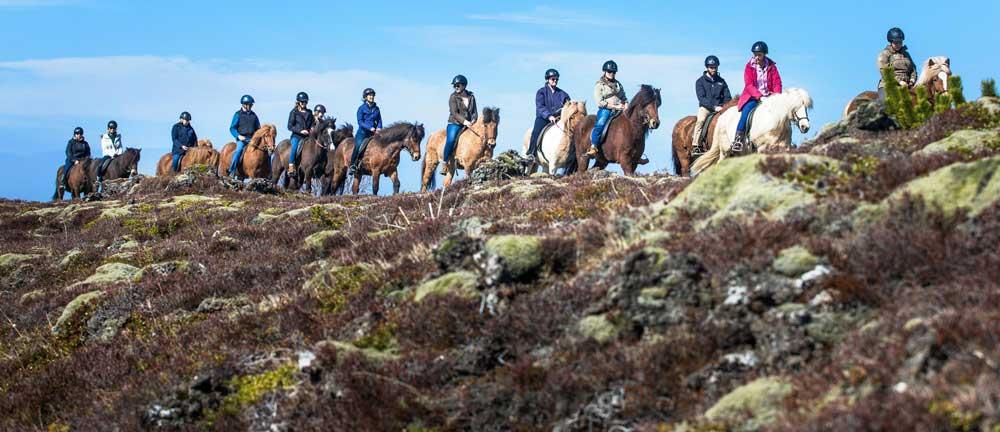 icelandic-horse-tour1