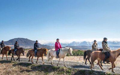 icelandic-horse-tour
