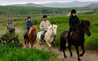 Horse riding tour Iceland