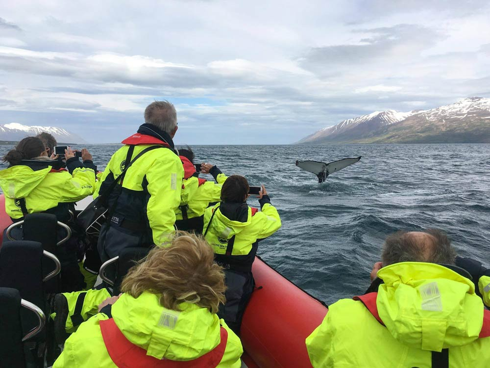 Rib boat whale watching in Iceland