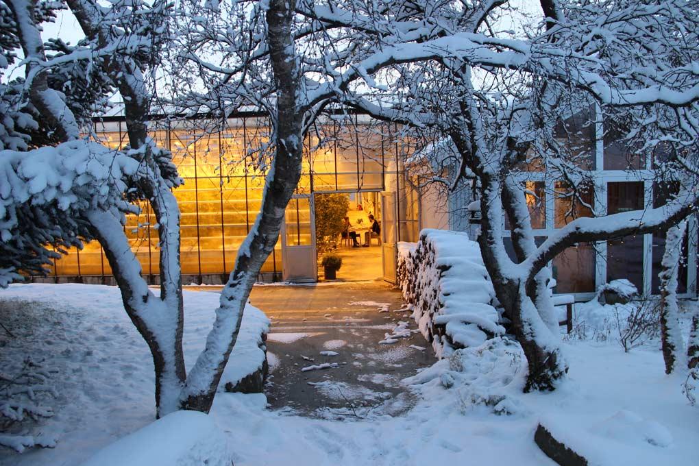 Fridheimar in Winter, Iceland