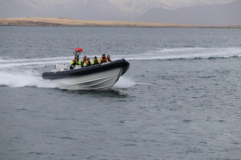 Rhib Boat Whale Watching