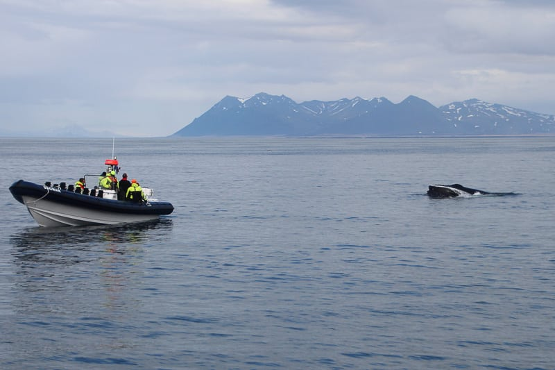 Rhib Boat Whale Watching