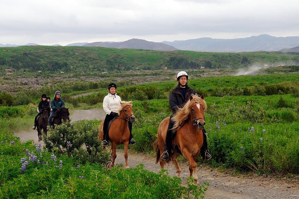 Icelandic Horse Riding