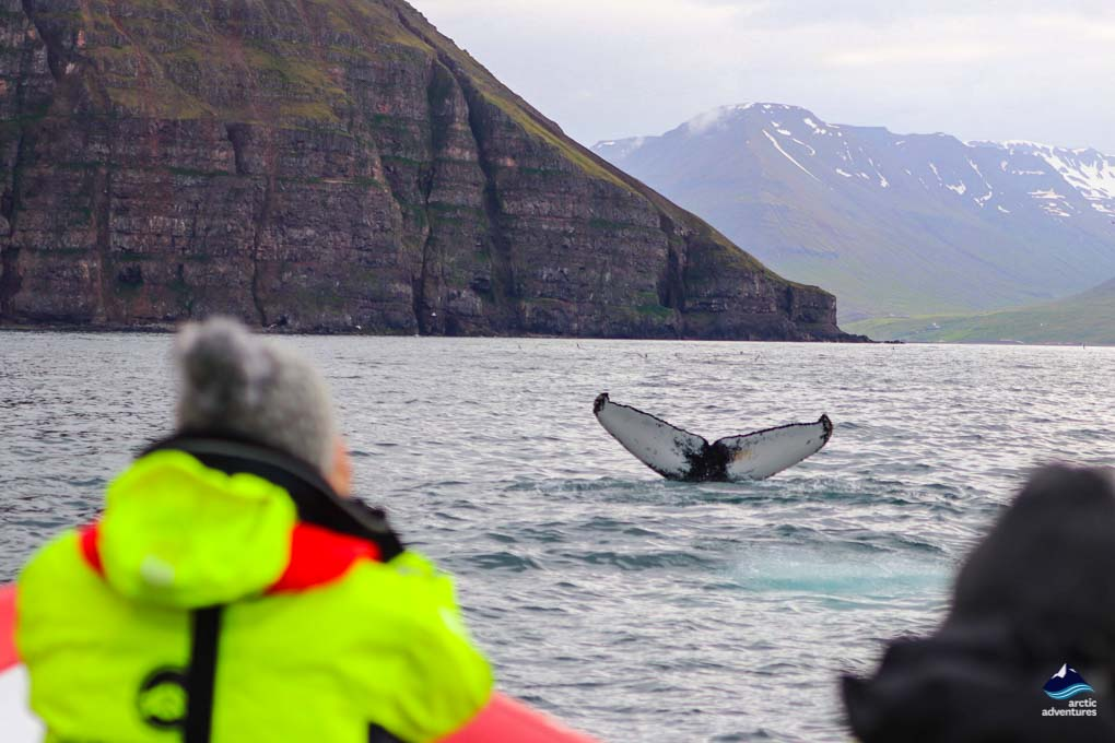 Whale spotting on a Watching Watching Tour