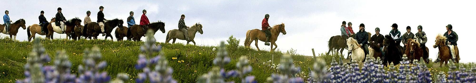 Horseback riding on Icelandic horses