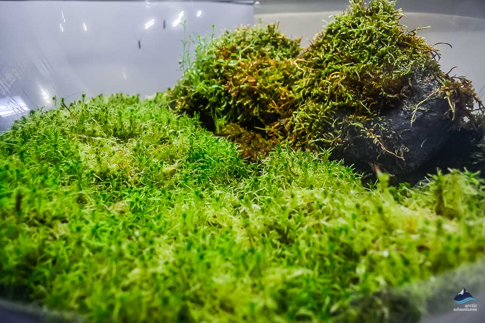 Moss at Perlan Exhibition
