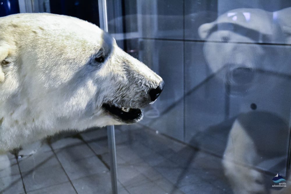 Polar Bear at Perlan Exhibition