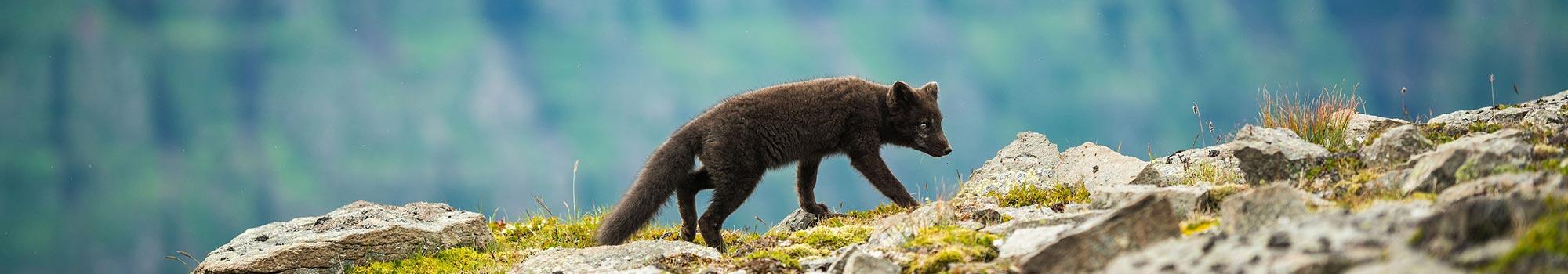 wilderness-animal