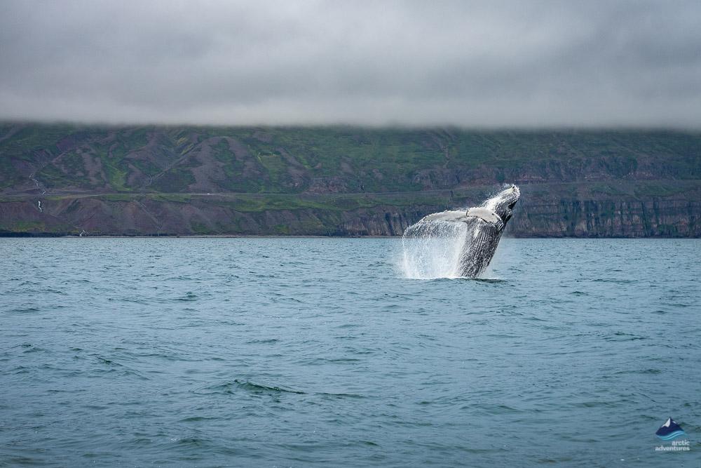 鲸鱼在海面一跃而起