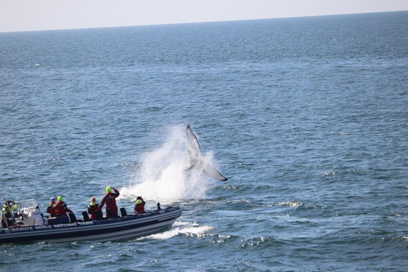 充气快艇观鲸