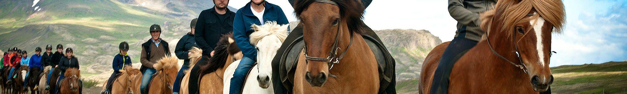 laxnes-horses