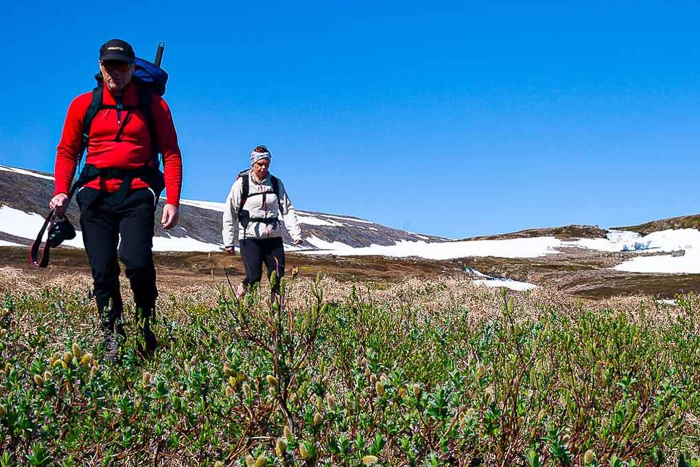 hornstrandir hike