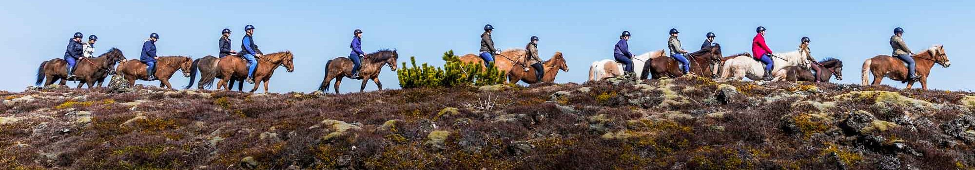 Horse riders group in Iceland