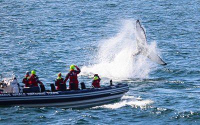 Speed boat whale watching Reykjavik
