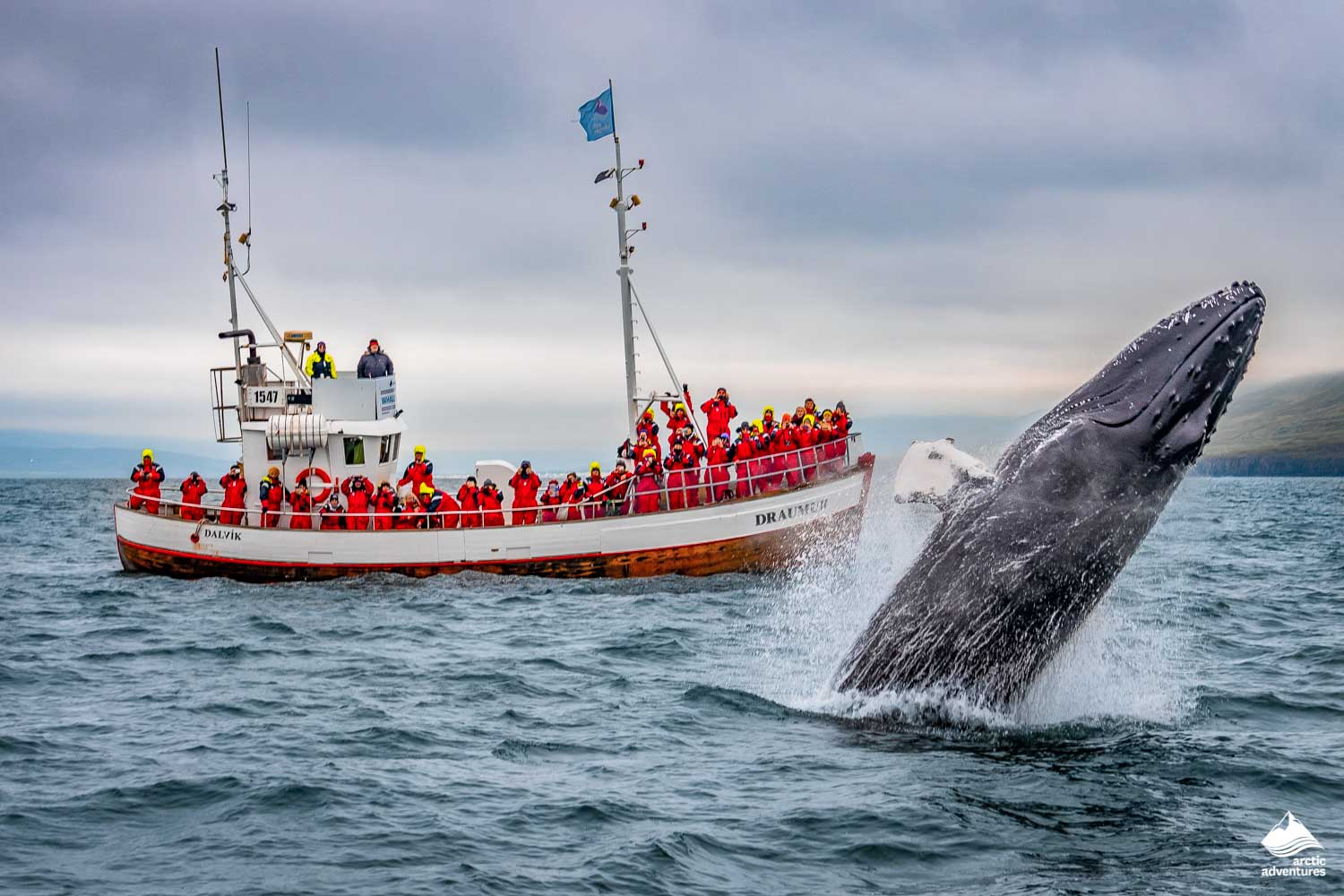 Whale watching in dalvik