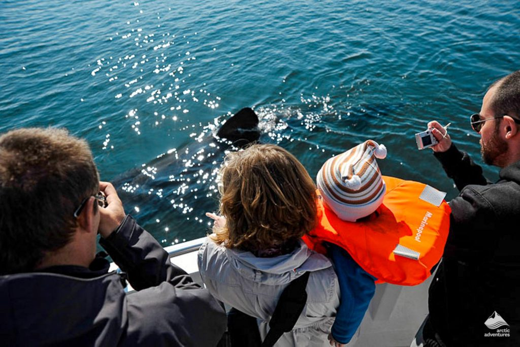 Tourist Group On Whale Watching Tour
