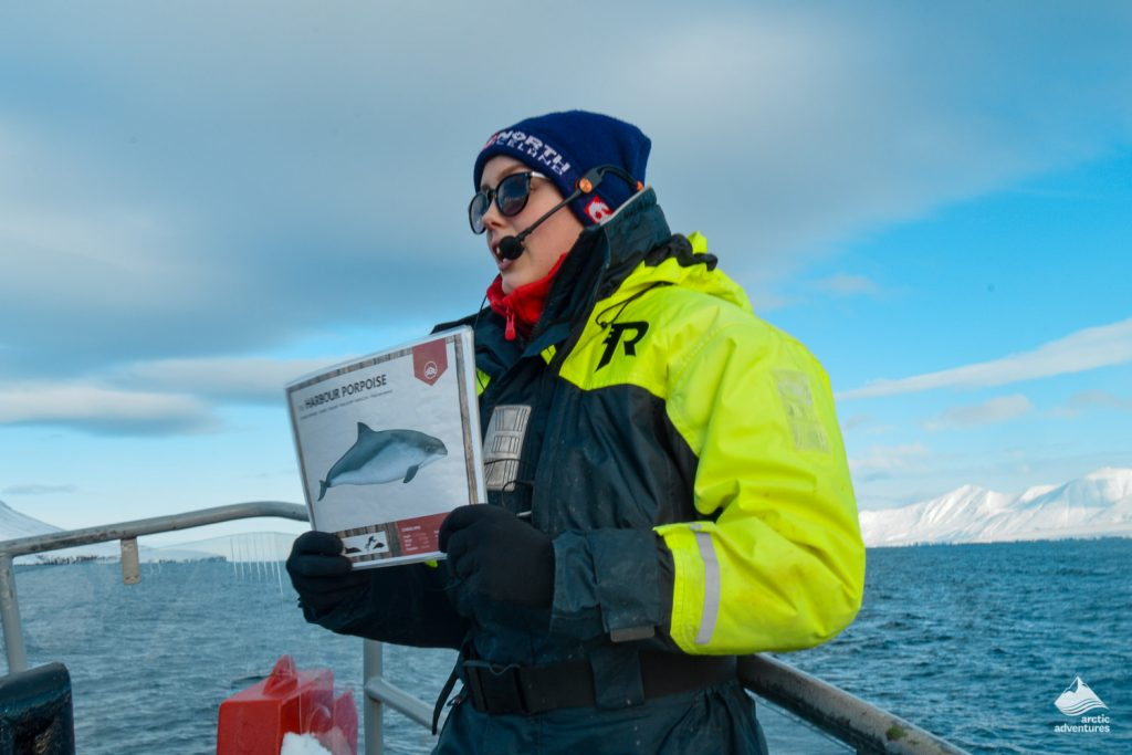 Guide Explaining About Whales In Iceland
