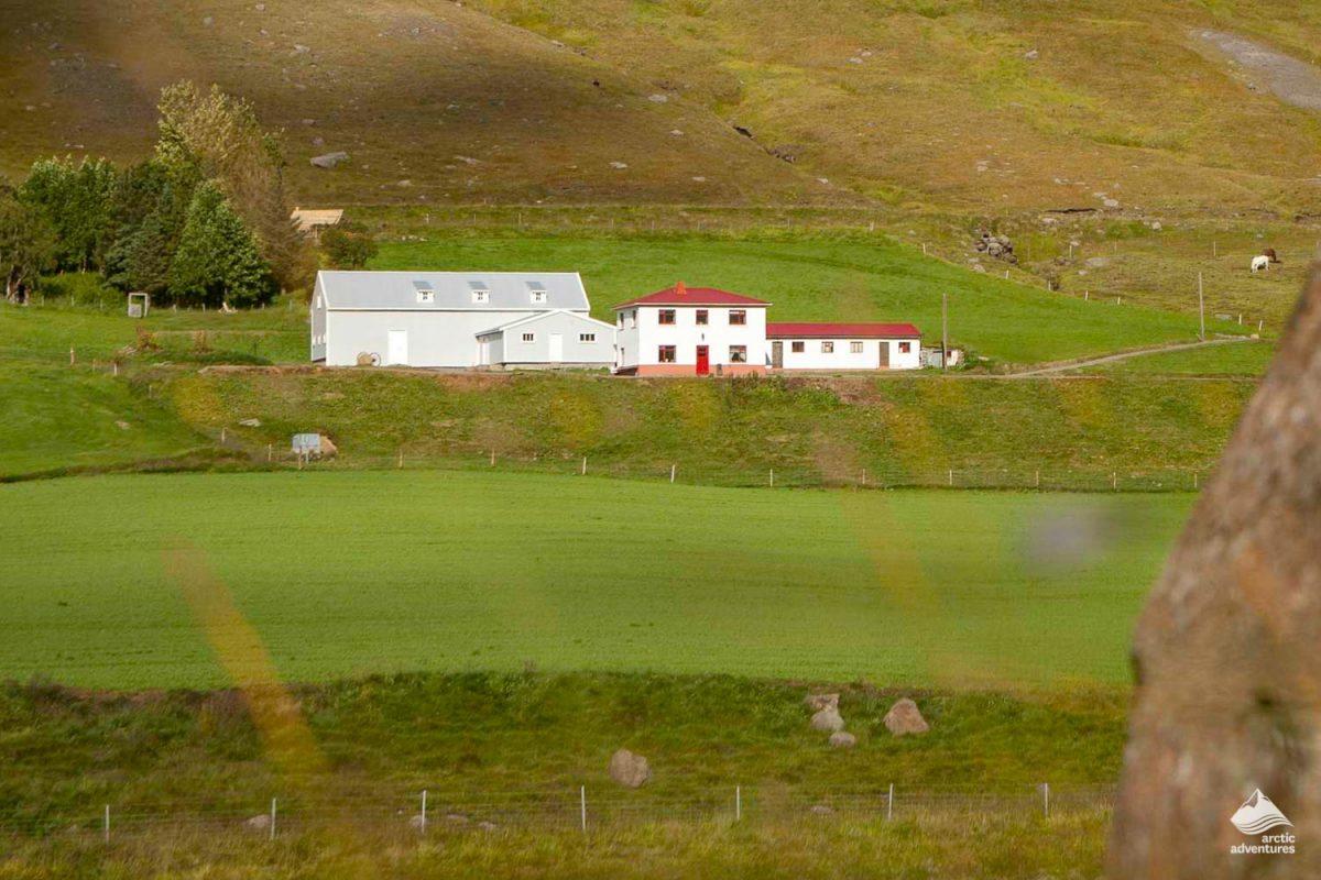 Farm at Wilderness ceenter in Iceland