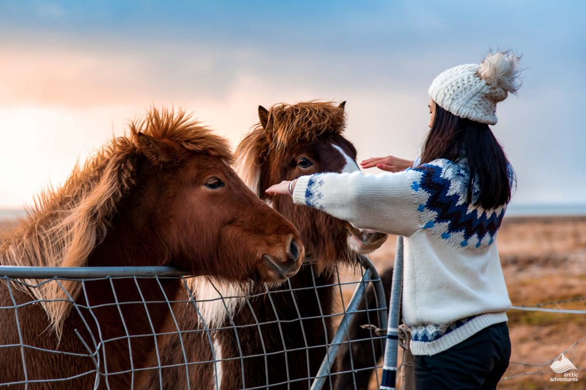 Woman making friends with Icelandic horses